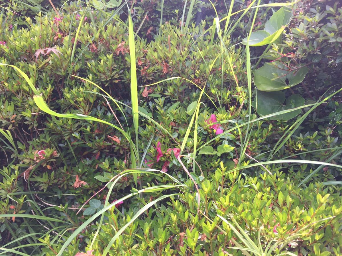 庭の雑草対策 雑草との付き合い方と実際の作業