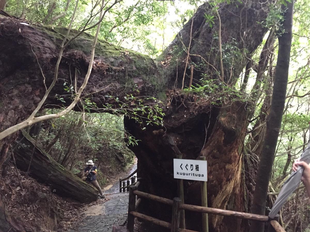 屋久島の垂直分布で出会った植物たち