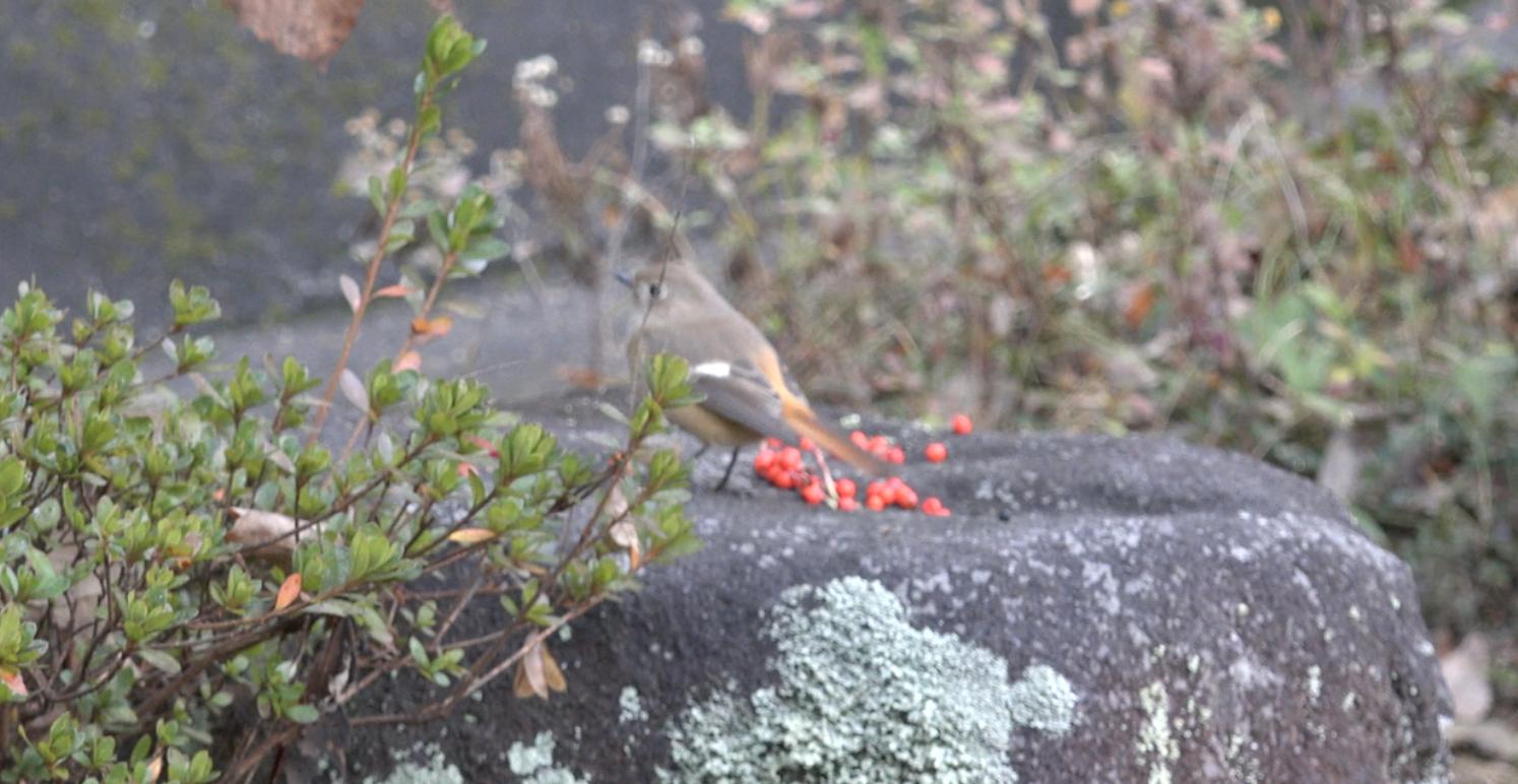 庭に来る野鳥の姿が見たくて、冬の庭先にエサを置いてみたら(動画あり)